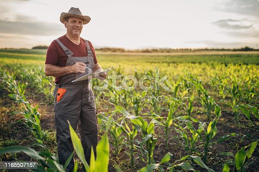 The farmer records the growth of corn