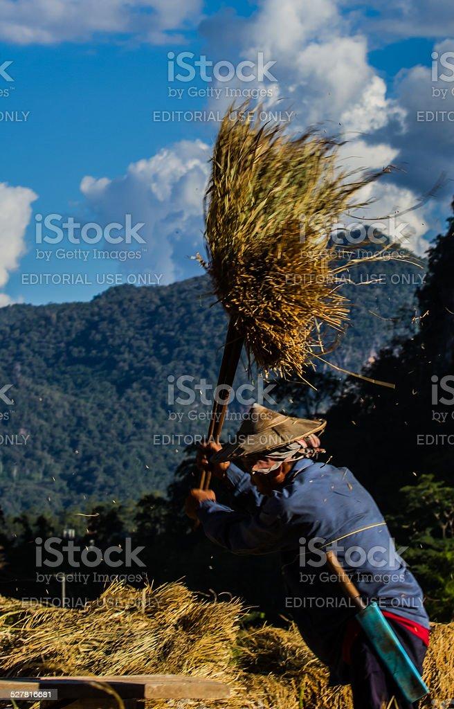 The farmer working. stock photo
