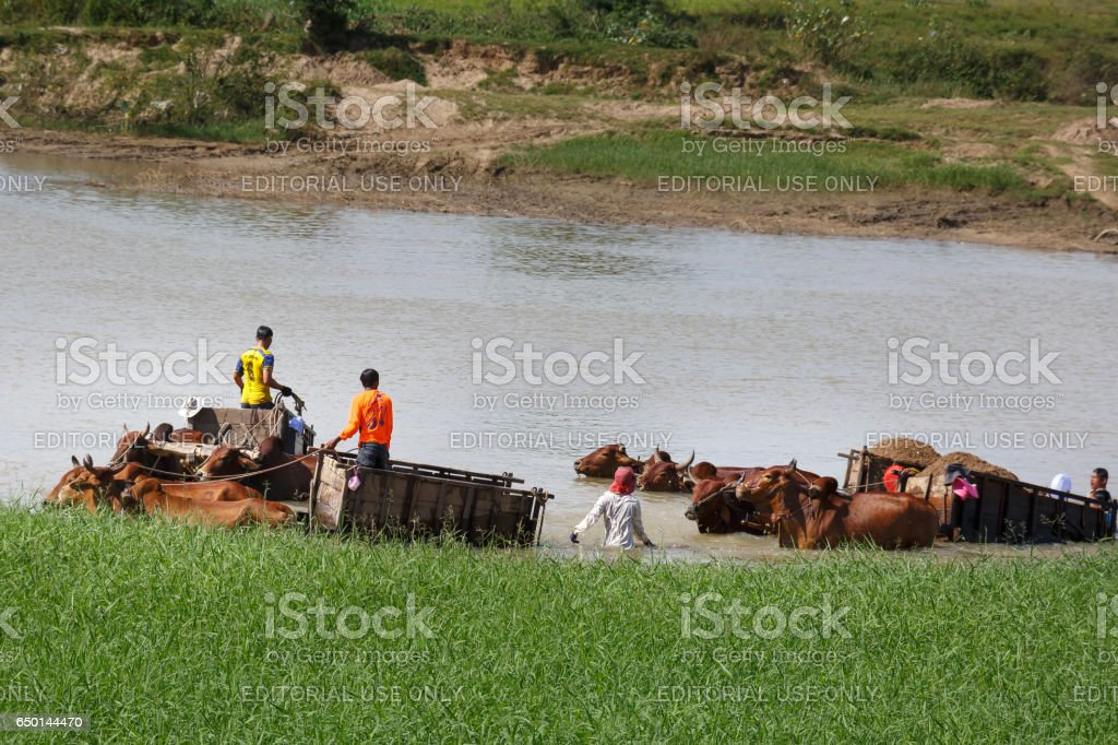 The farmers are exploit the sand in the riverbed with rudimentary tools stock photo