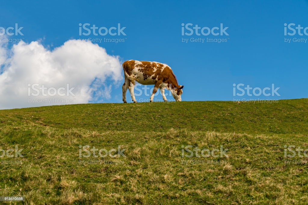 'El pedo vaca' - una vaca y una nube - foto de stock