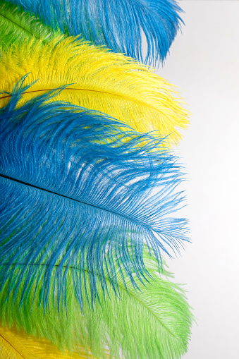The feathers of birds are green, yellow and blue. Colors of the flag of Brazil. Headpiece for a carnival costume