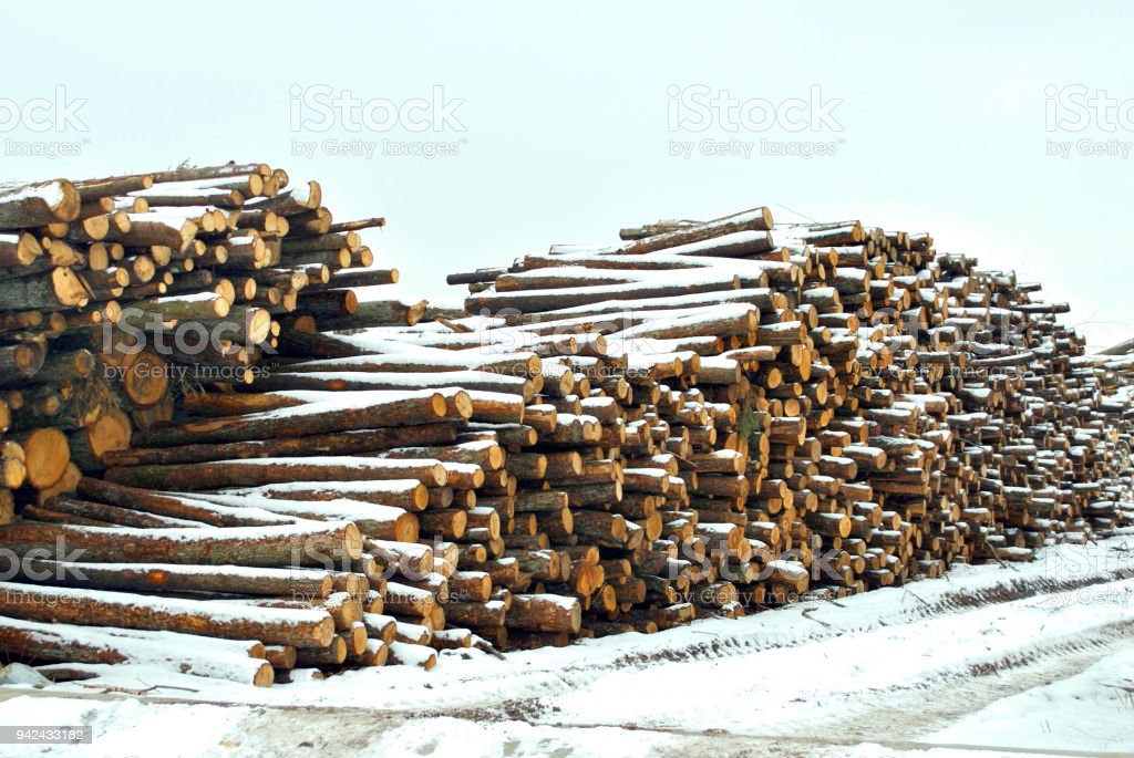 The felled trees for production under snow caused by a snow storm. stock photo