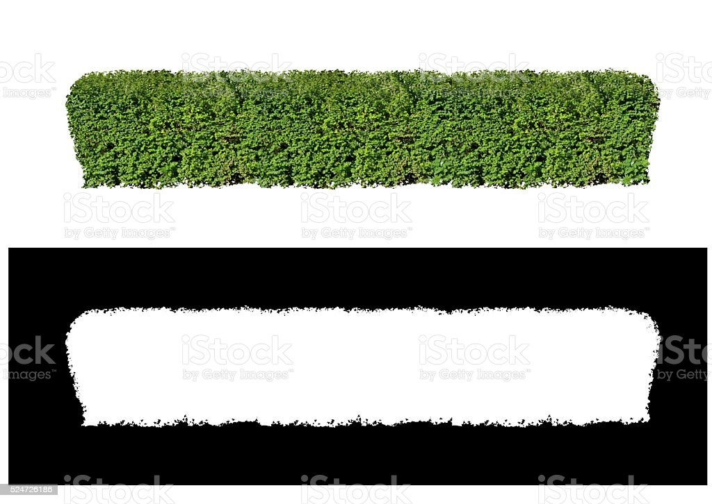 The fence of bushes stock photo