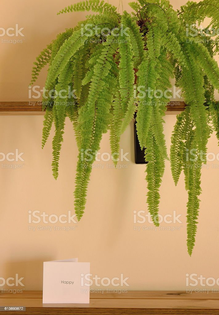 The Fern Plant And A U0027Happyu0027 White Card Stock Photo