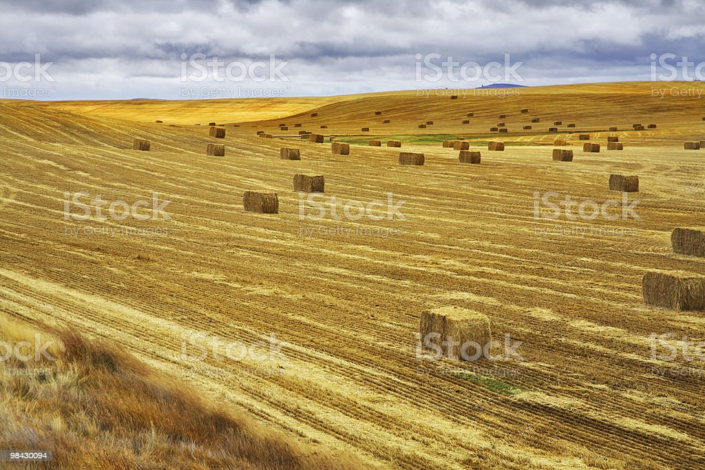 The field after a harvest royalty-free stock photo