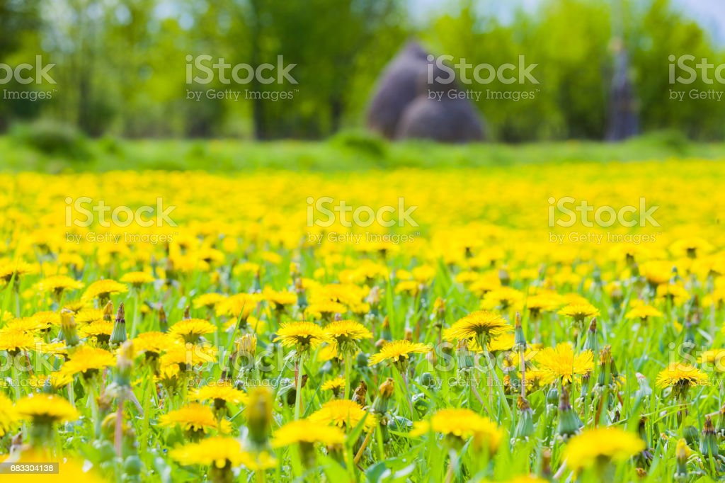 The Field Is Alive foto stock royalty-free