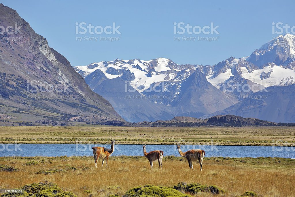 The field, lake and snow-capped mountains royalty-free stock photo