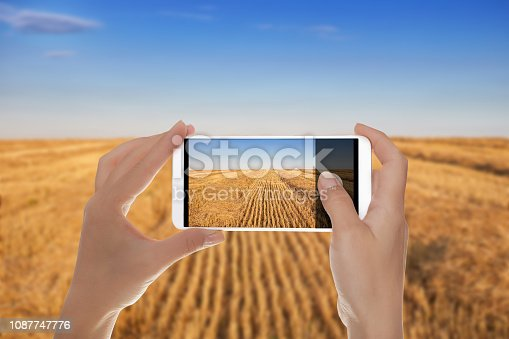 istock The field of cereals after harvesting 1087747776