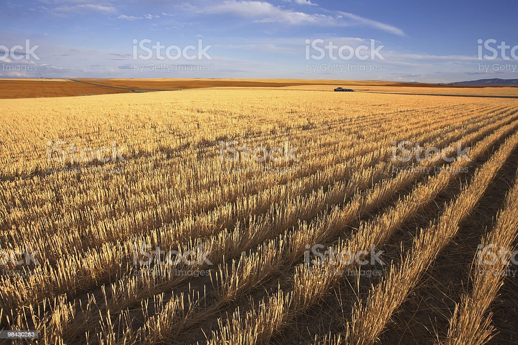 The fields of Montana after harvesting royalty-free stock photo