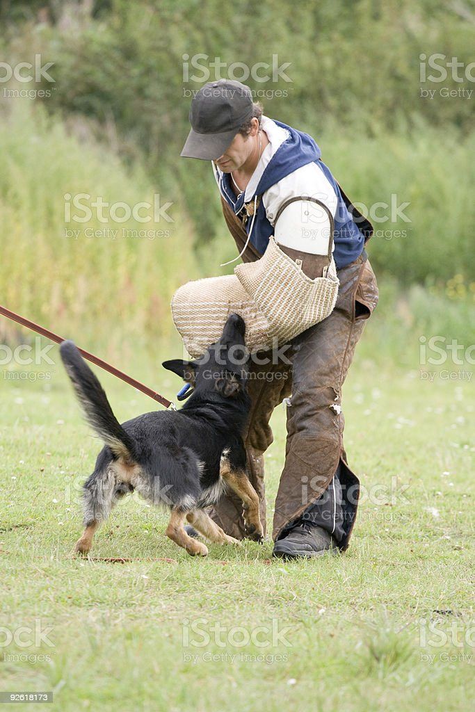 The figurant training a German shepherd royalty-free stock photo