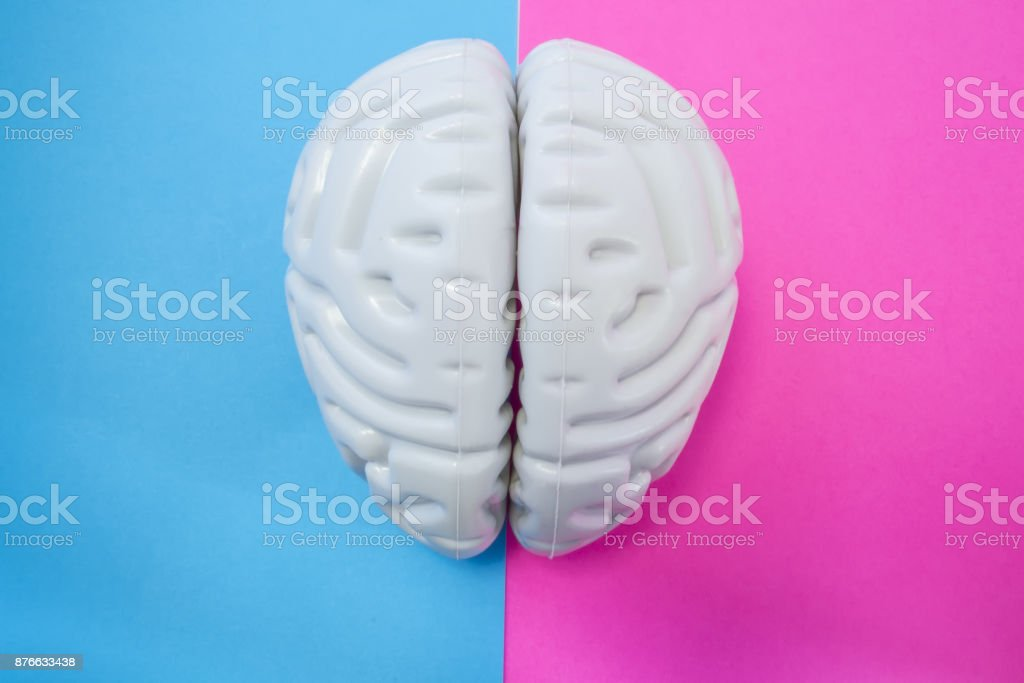 The figure of human brain separates half blue pink background. The concept of male and female brain. The idea for brain union or difference of man and woman in love, life, science, medicine or anatomy stock photo