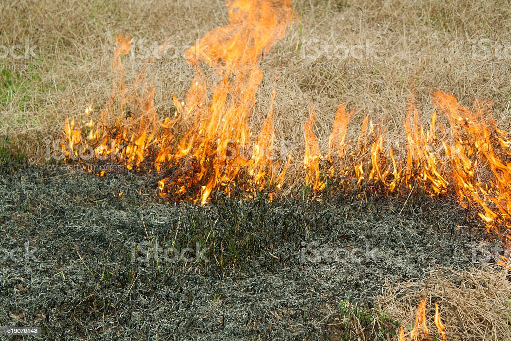 The fire on the nature - burns a grass in the field stock photo