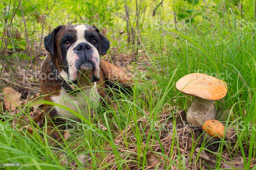 The first mushrooms - 2016 stock photo