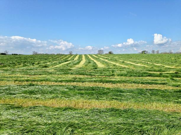 the first silage of the year - mcdermp stock photos and pictures
