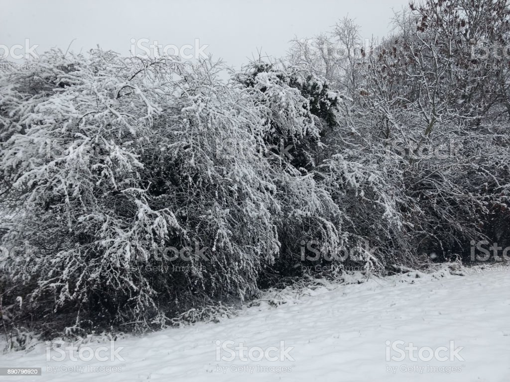 The first snow in London stock photo