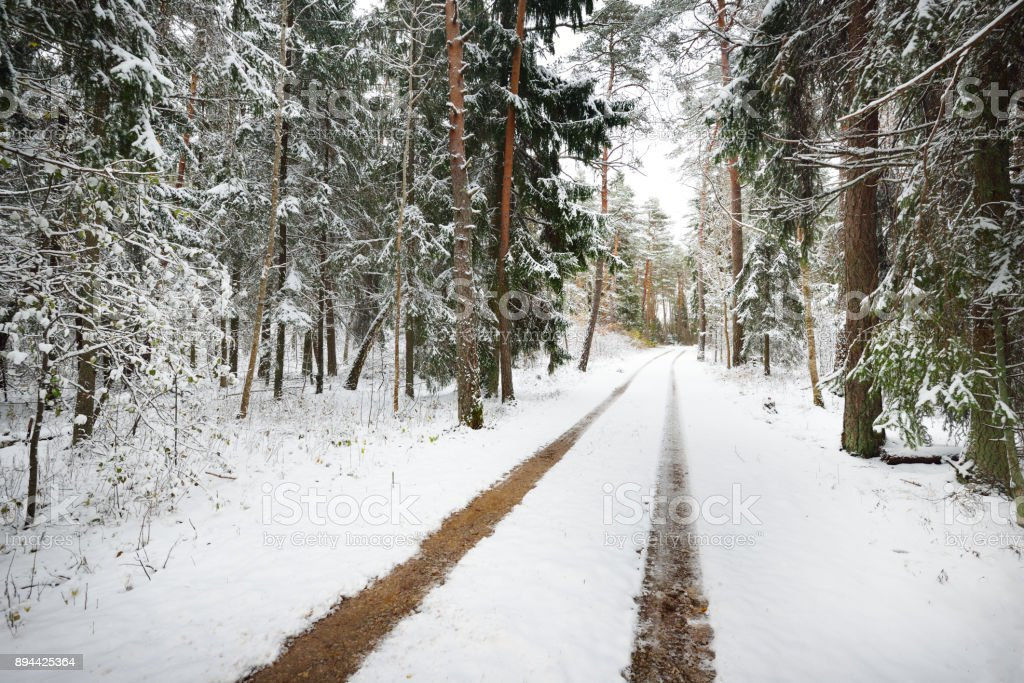 The first snow on a small forest road in November. Estonia, the Baltics. stock photo