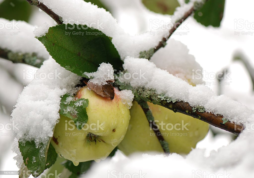 The first snow royalty-free stock photo