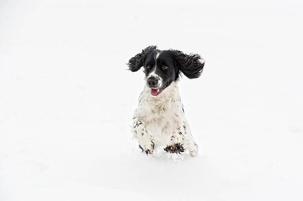 The first snow picture id155420606?b=1&k=6&m=155420606&s=612x612&w=0&h=dinzqoxkeftnl f83bq9 5 xnm8svbg3jcpbdhi5jk8=