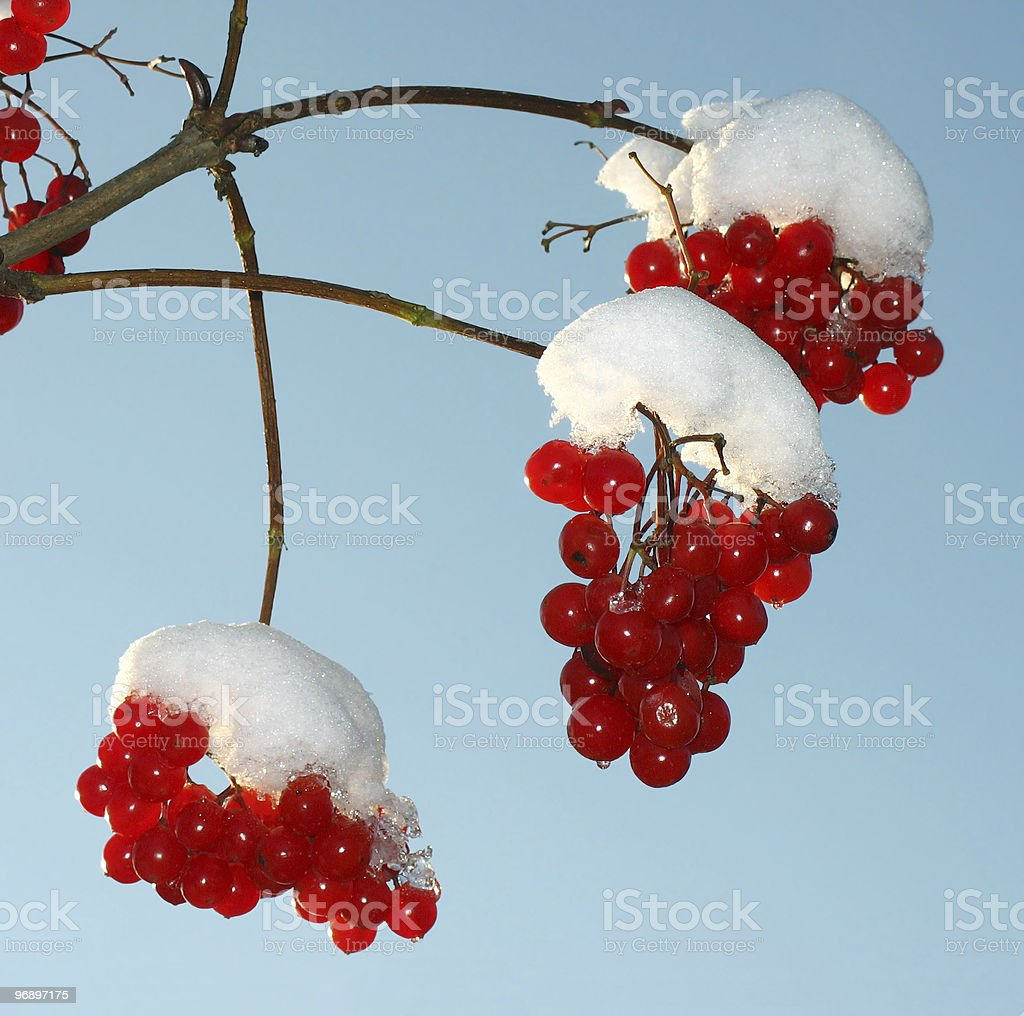 The first snow. royalty-free stock photo
