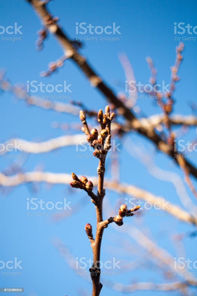 The first spring gentle leaves, buds and branches royalty-free stock photo
