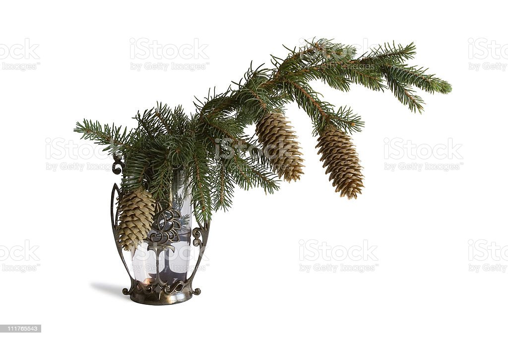 The fir-tree branch in a vase royalty-free stock photo