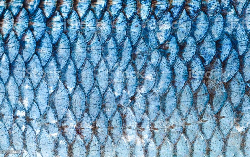Der Fisch Schuppen Hintergrund hautnah. Farbe: Silber – Foto
