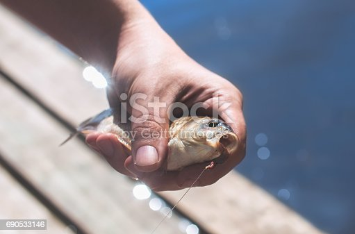 1145410808 istock photo The fisherman is holding a fish caught on a hook 690533146