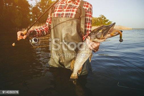 914030378 istock photo The fisherman is holding a fish pike caught on a hook 914030376