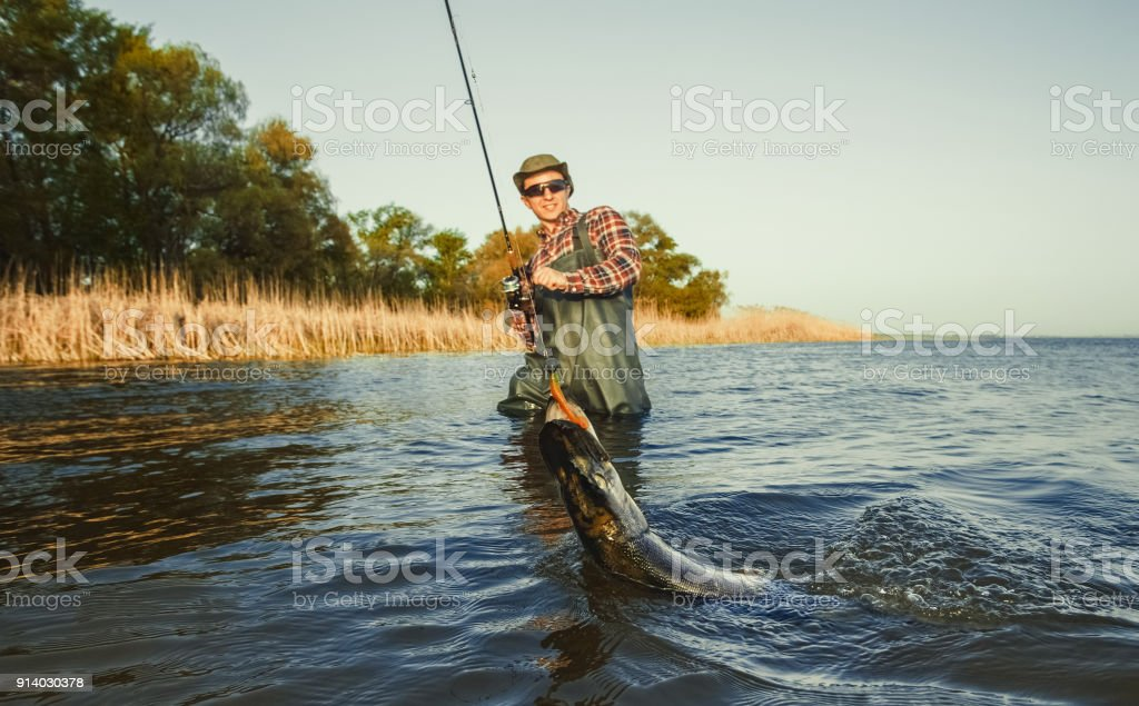 The fisherman is holding a fish pike caught on a hook stock photo