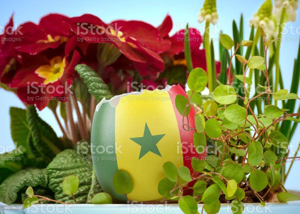 A bandeira do Senegal em um ovo rachado em uma cena floral. (série) - foto de acervo