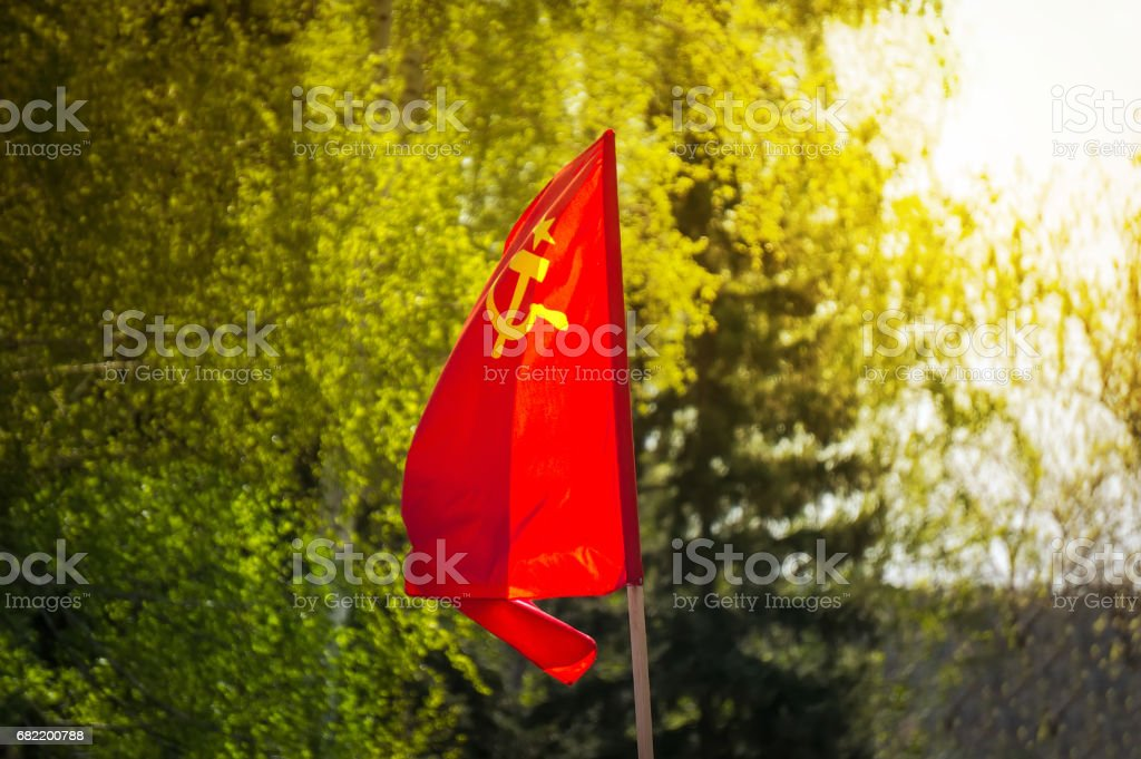 The flag of the Soviet Union develops on the background of green trees. stock photo
