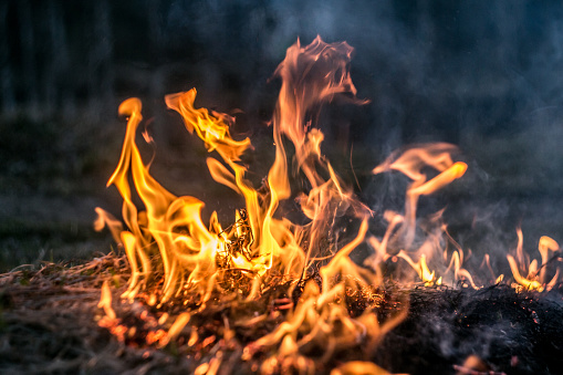 istock The flames of the fire burning the herb in the evening field, turning into coals and ashes with smoke 1127157734