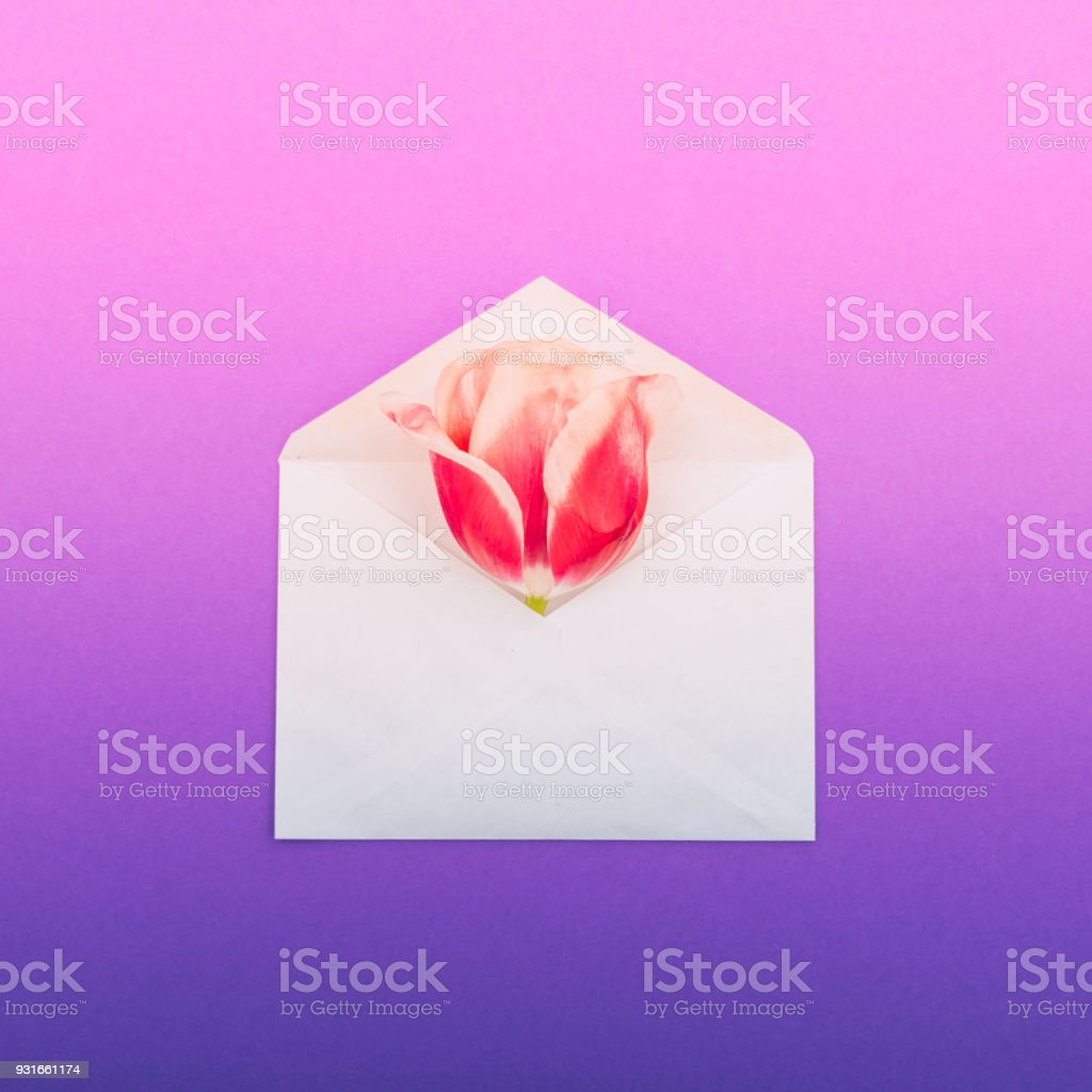 The Flower Bud Of A Tulip In A Paper Envelope Letter Stock Photo