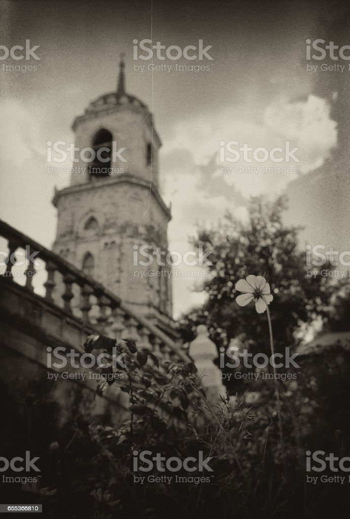 The flower grows on the territory of the Vladimir Church in Bykovo. stock photo
