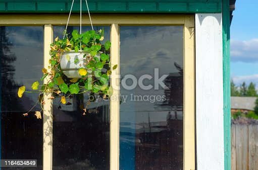 The flower pot is suspended on the roof of a private house on the background of the reflection in the window of the trees of the forest and residential area in the North of Yakutia.