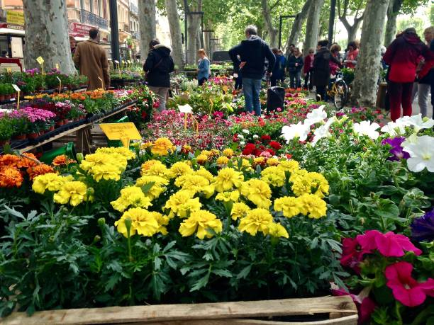 the flowers of france - mcdermp stock photos and pictures