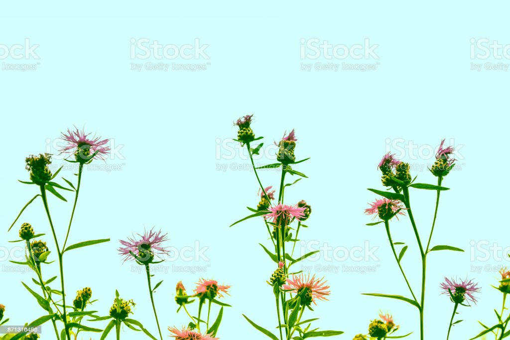 The flowers of the field. stock photo