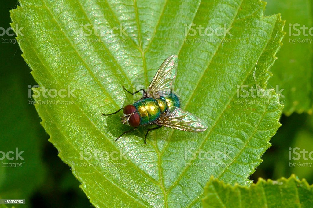 The fly sitting on a leaf stock photo