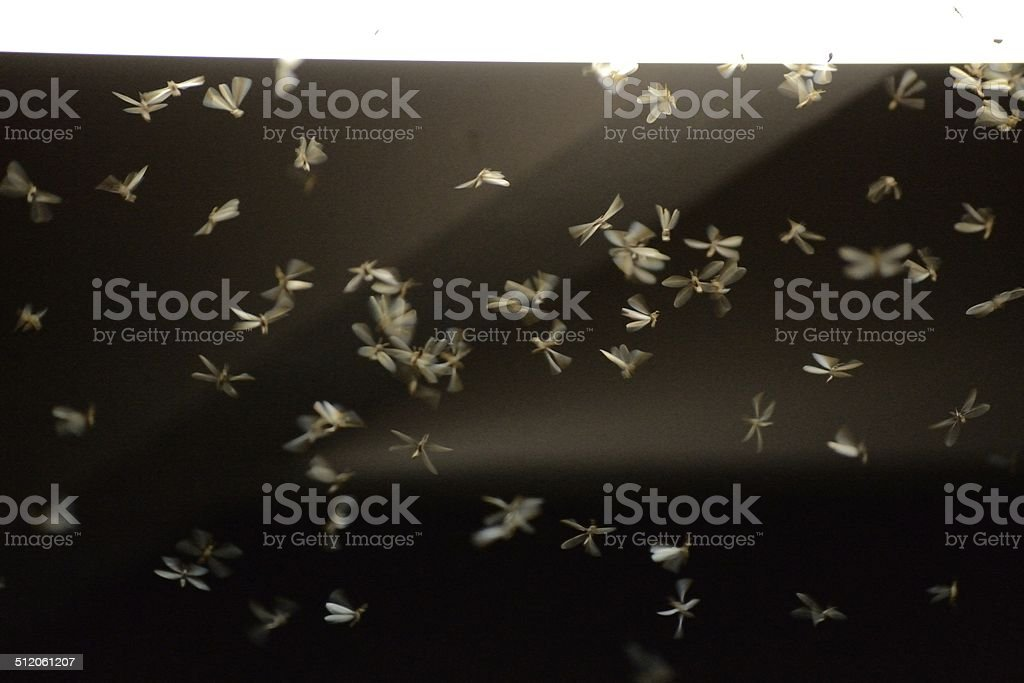 The Flying moths stock photo