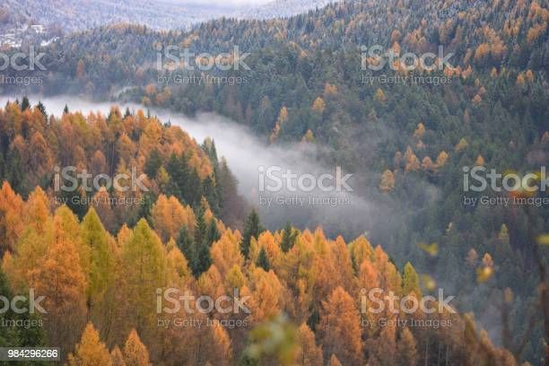 Photo of The fog in the valley on the river