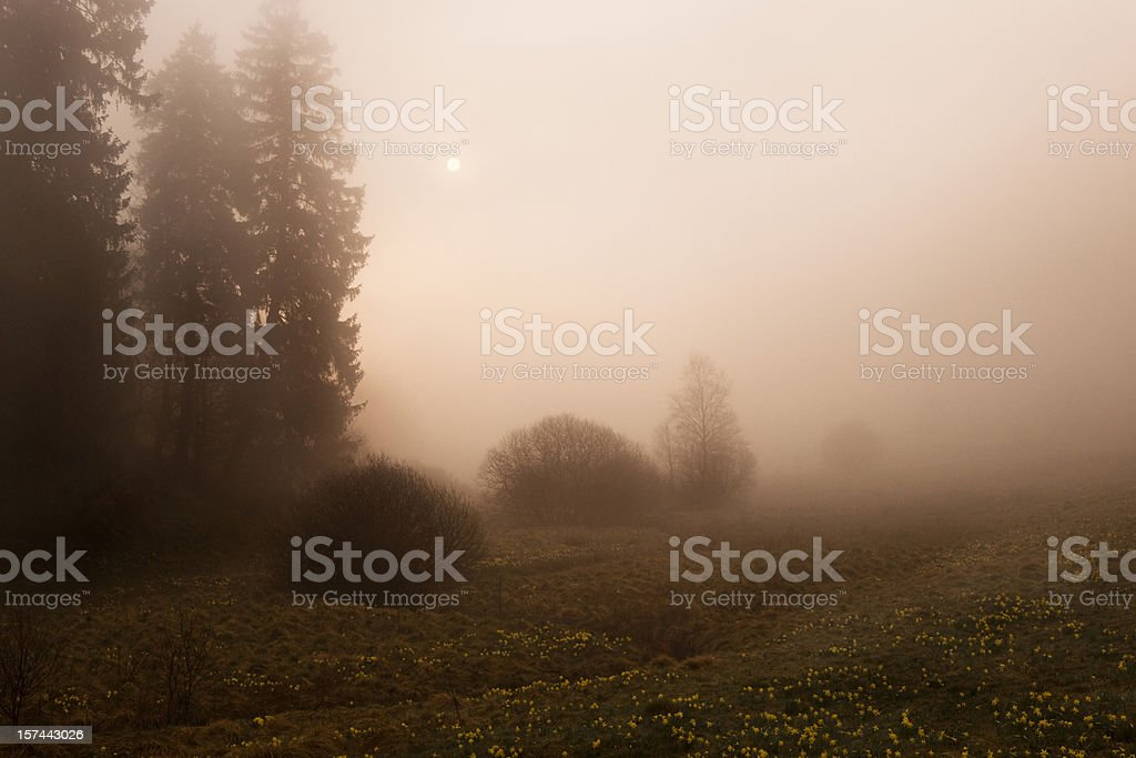 The fog. royalty-free stock photo