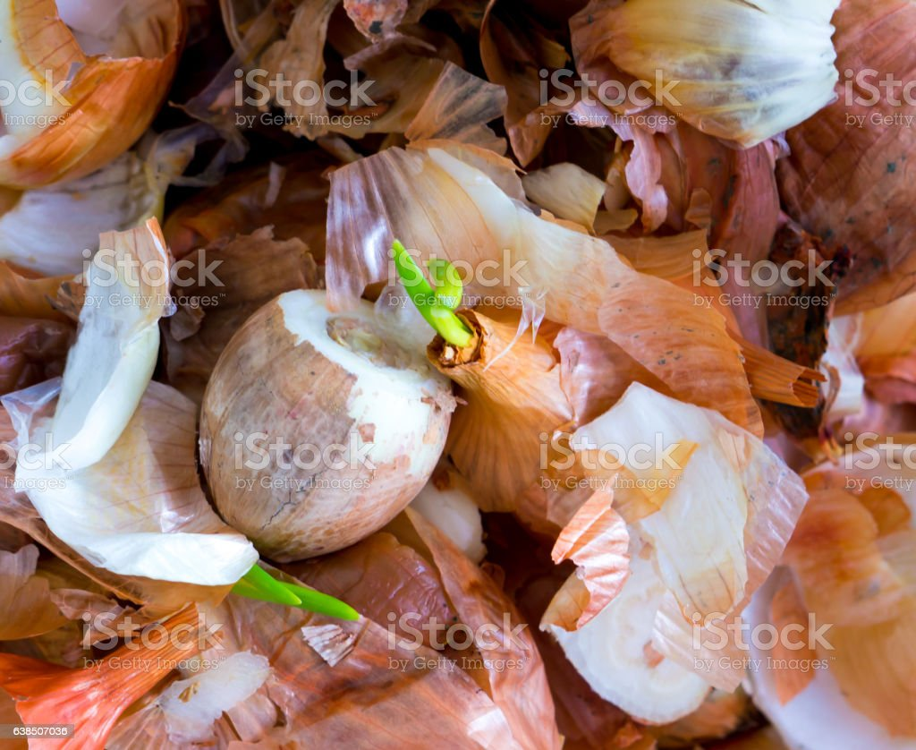 The food Garbage. stock photo