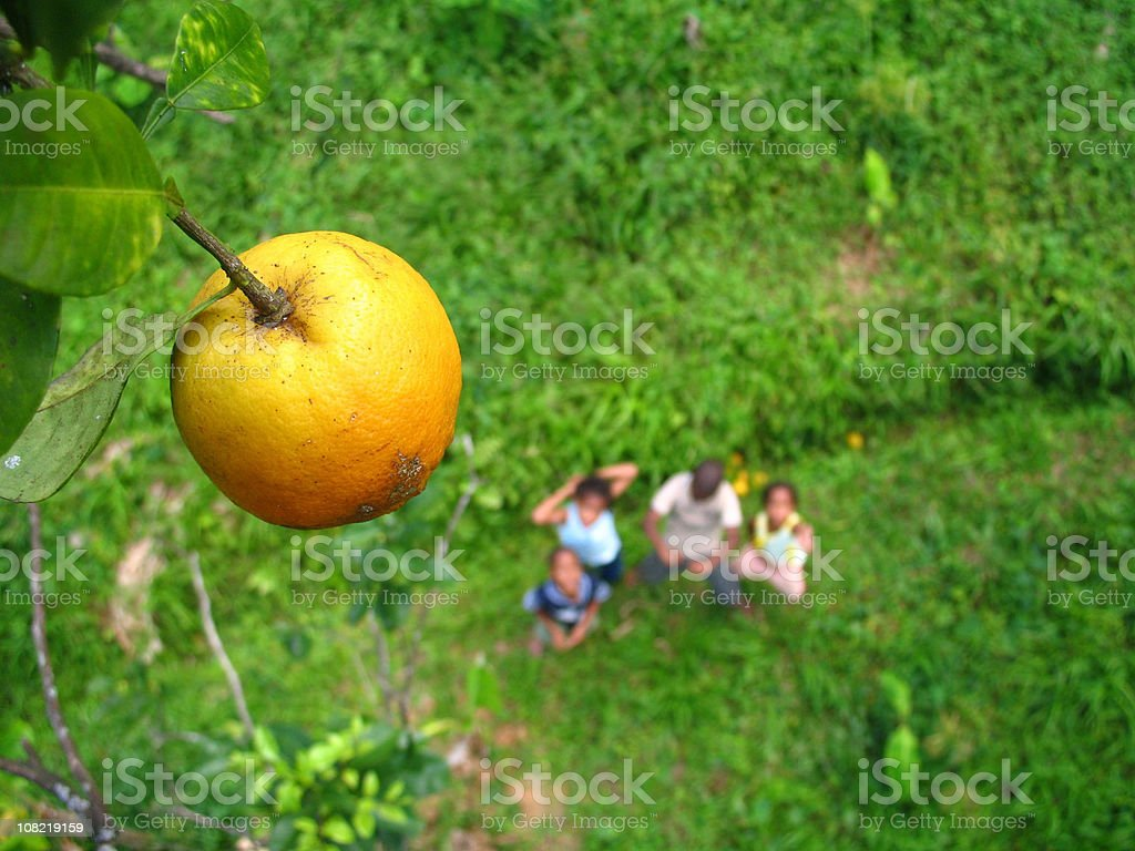 The forbidden fruit royalty-free stock photo