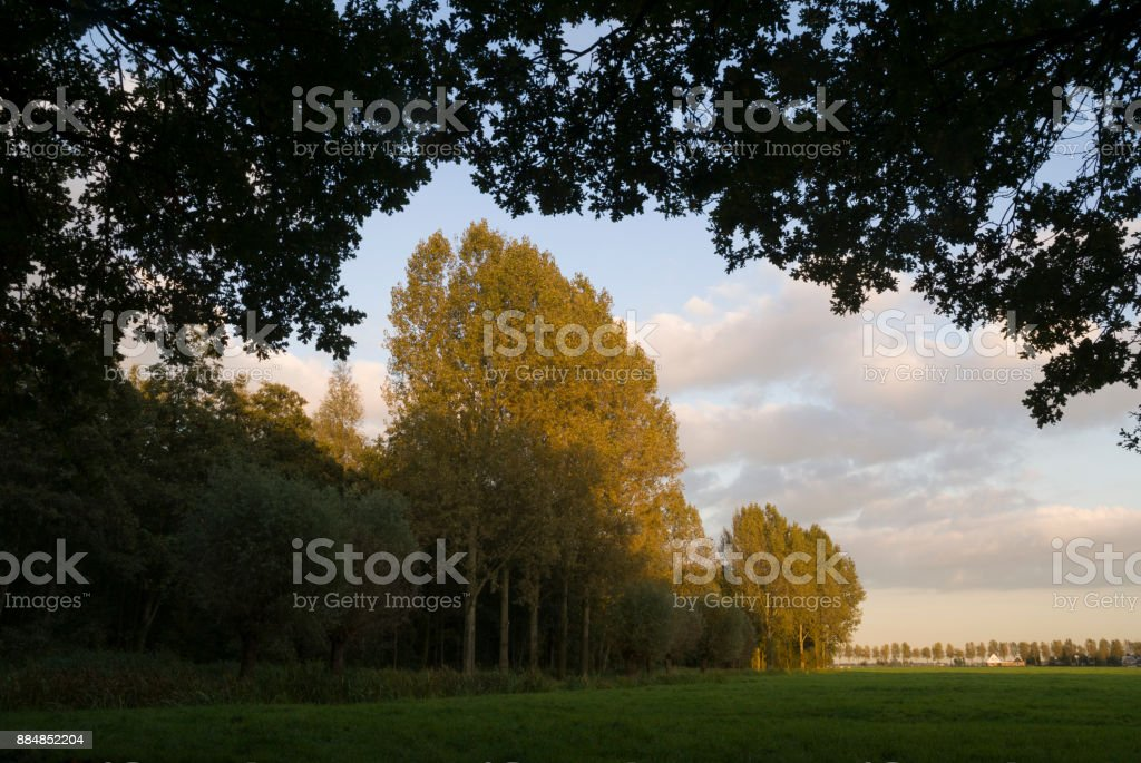 The forest Alblasserbos stock photo
