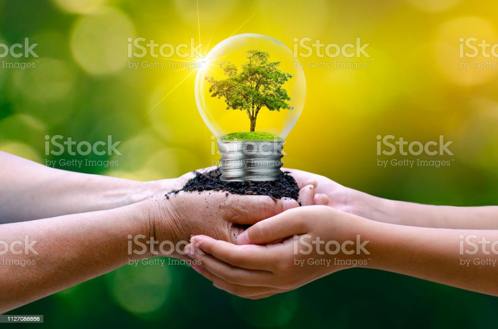 The forest and the trees are in the light. Concepts of environmental...