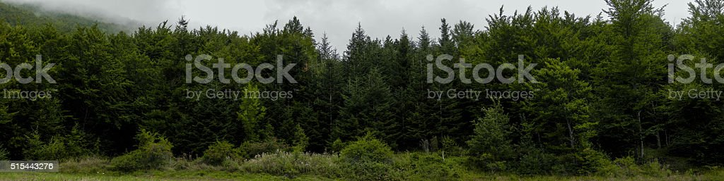 The Forest Border: firs and deciduous trees. stock photo