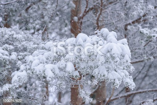 istock The forest has covered with heavy snow and bad weather sky in winter season at Lapland, Finland. 1200747622