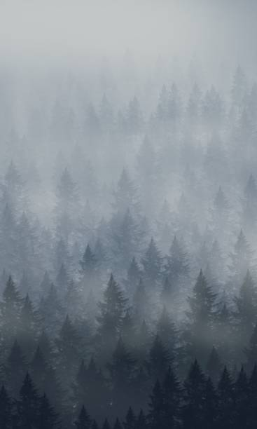 the forest in season - trees in mist stock pictures, royalty-free photos & images
