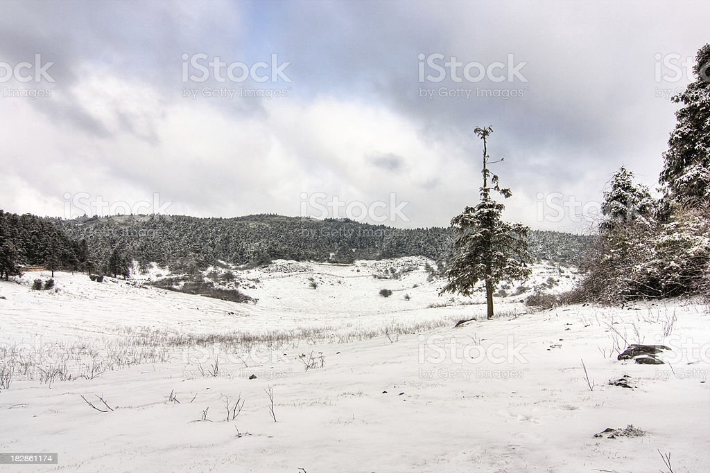 The forest in winter stock photo