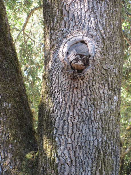¡El bosque te está mirando! - foto de stock